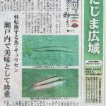 日本海新聞「海辺をジオってみよう」10月はキュウセンのお話♪