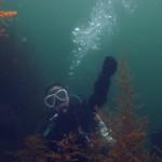 竹野切浜洞門の良さは透明度とダイナミックな景観、ウミウシの多さ☆海ログ